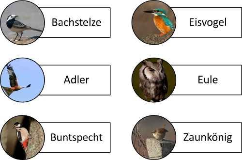 Bilder von Vögeln zur Aktivierung für Senioren