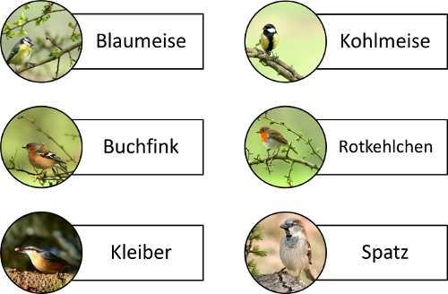 Bildkarten von Vögeln zur Aktivierung von Senioren
