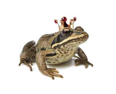 Märchen Froschkönig der Gebrüder Grimm erkennen mit Stichworten und Zitaten aus dem Märchen