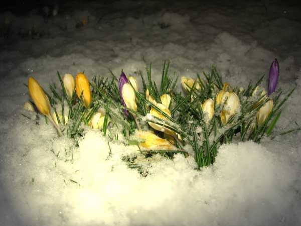 Blumen im Frühling zur  Aktivierung  und Beschäftgung für Senioren auch mit Demenz oder Alzheimer